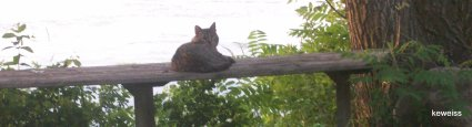 Stripe, First Dadcat
