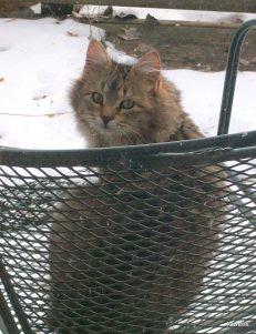 Foxy Mom-cat