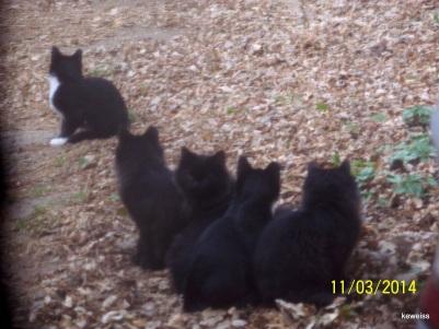 Spot's first babies