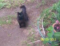 Spot bossy mom-cat