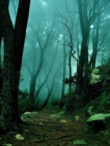 Deep Forest Fog_tumblr_na07a60hZs1tvn5ezo1_1280