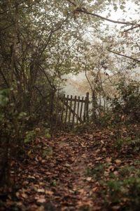 Woodlandss8_Pinterest_542e3e070fcc1a3f4d642743cbef3272