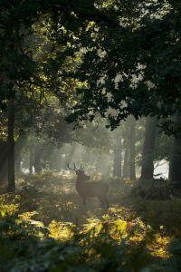Woodlands5_Pinterest_19aa93d4d9f7394ab6ef734d043c9ae6